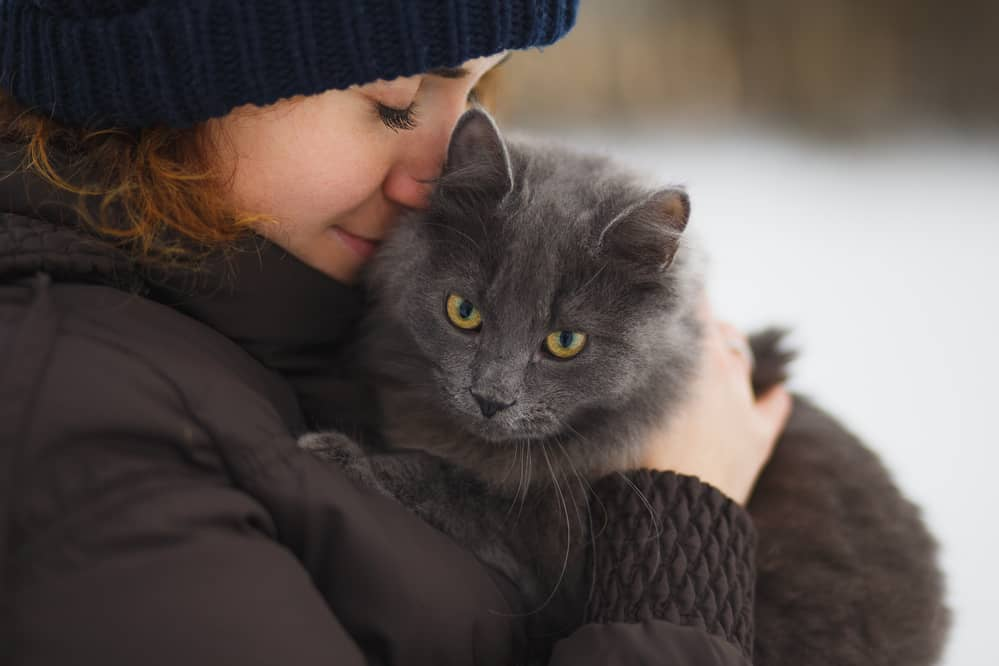 Do Cats Actually Love Their Owners image