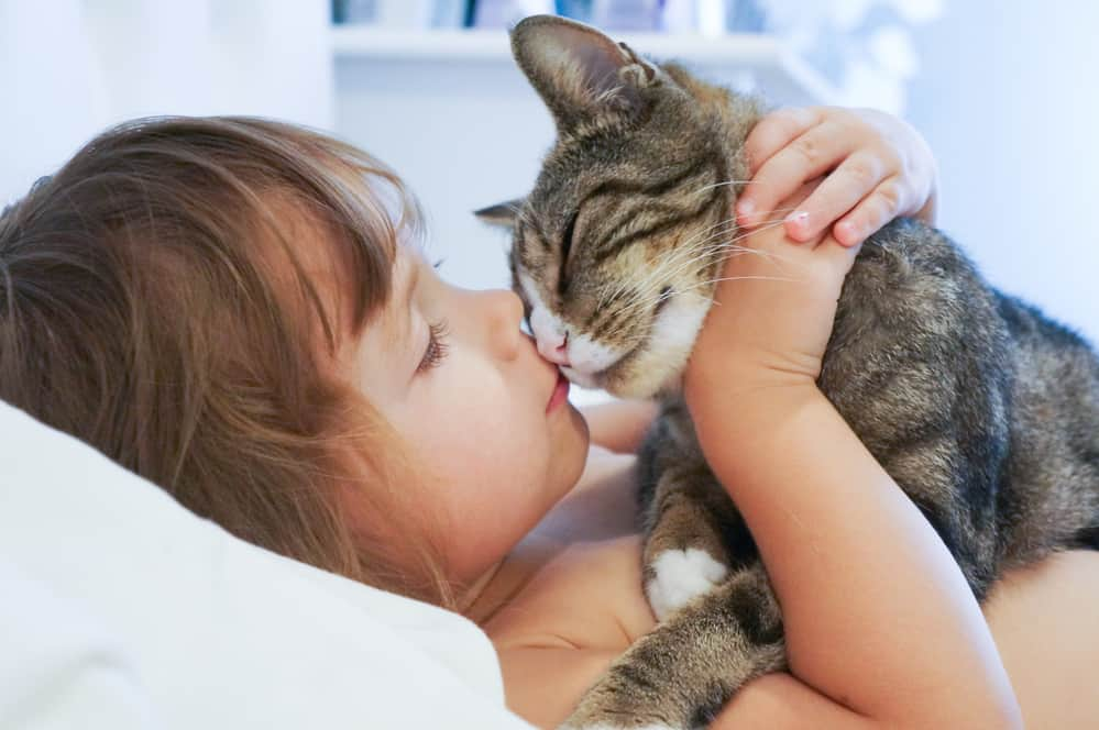 Reasons Why We Love Our Cats So Much featured image