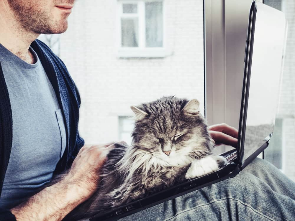 Why Do Cats Love Computers image
