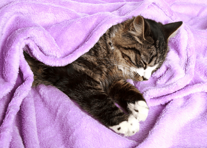a cat sleeping on a dirty pink towel