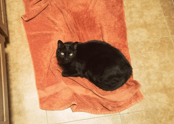 black cat lying on an orange dirty towel on the floor