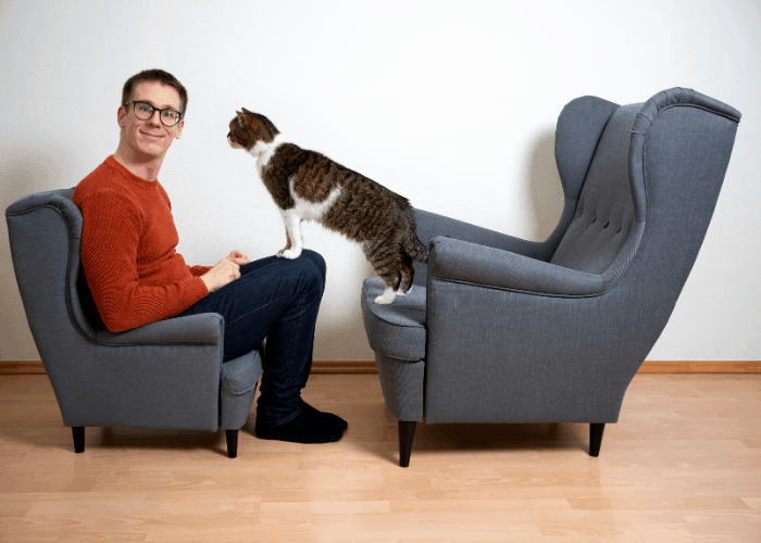 cat standing on owner's lap to seek attention