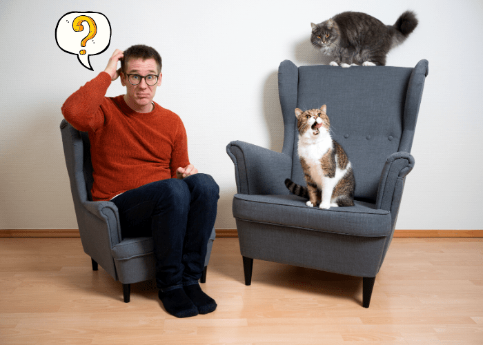 owner confused with his 2 cats