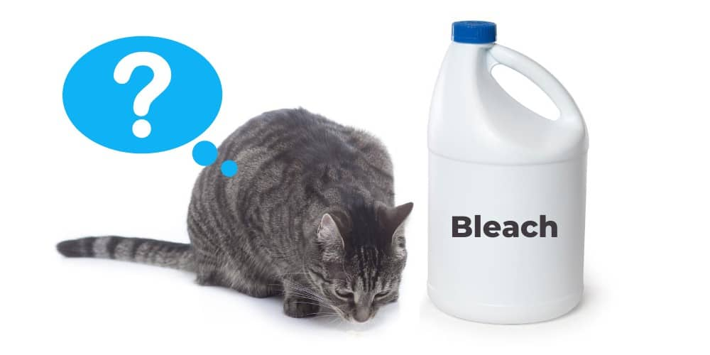 Why Do Cats Like The Smell of Bleach image