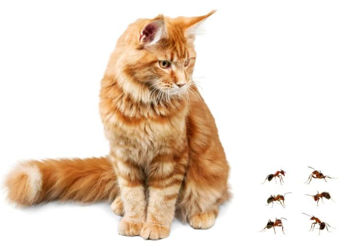 cat looking at 6 ants on the floor