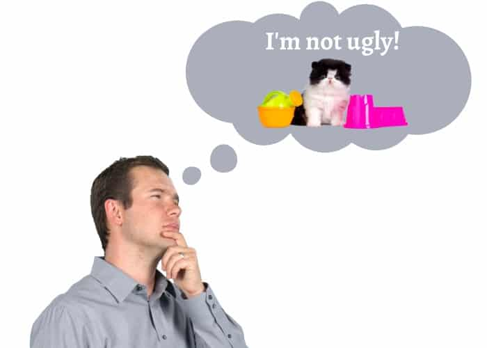man thinking about a persian cat saying that it is not ugly