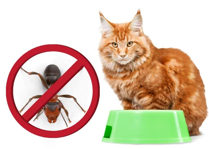 no ants allowed in cat food illustration