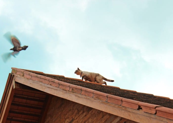 cat trying to catch a bird