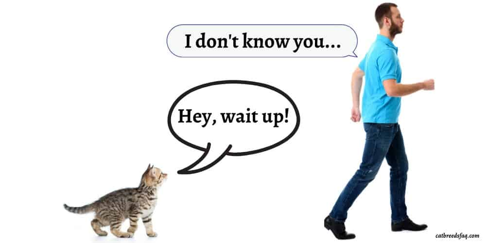 Why do Cats Follow Strangers featured image