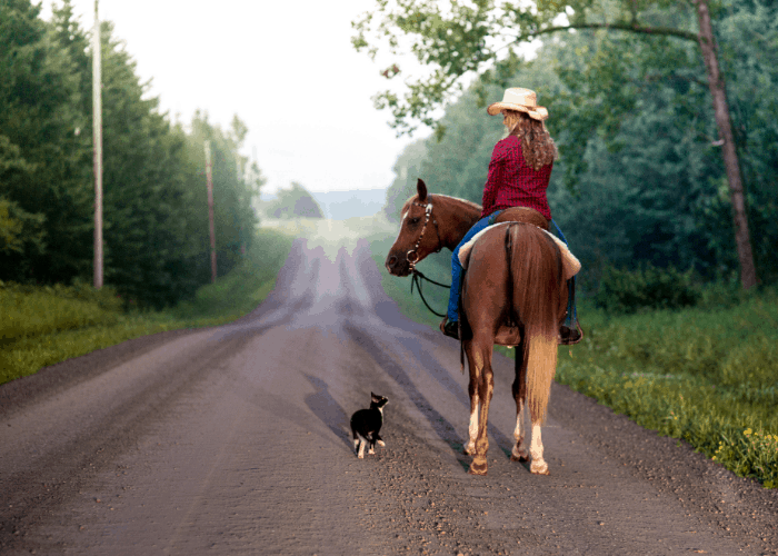 cat following a lady riding on a horse