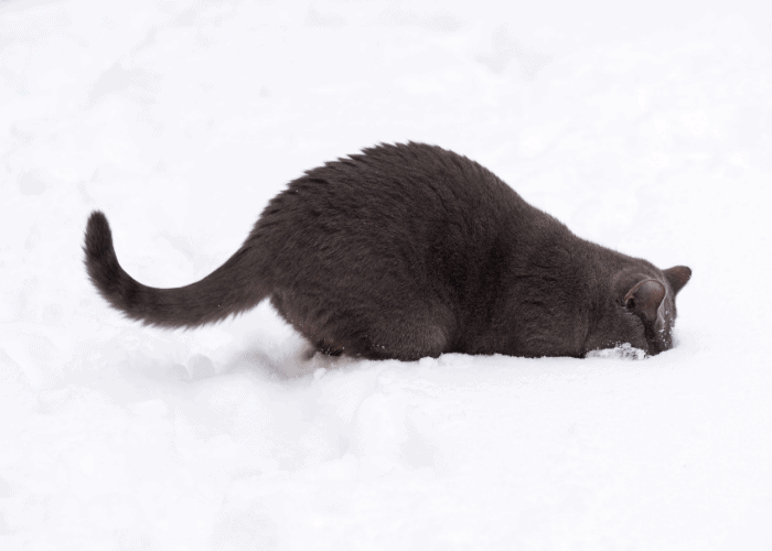 cat digging holes in the snow