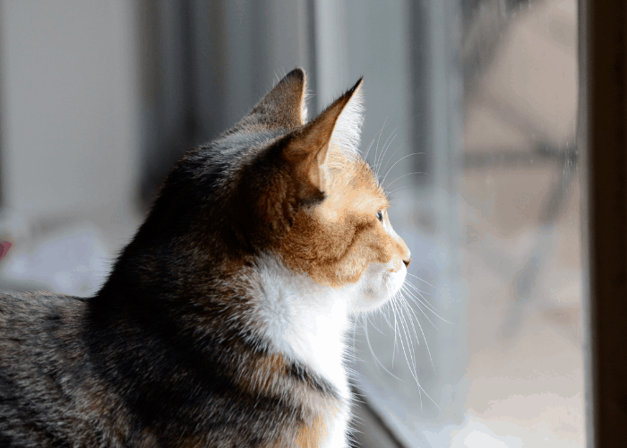 cat looking out of the glass window
