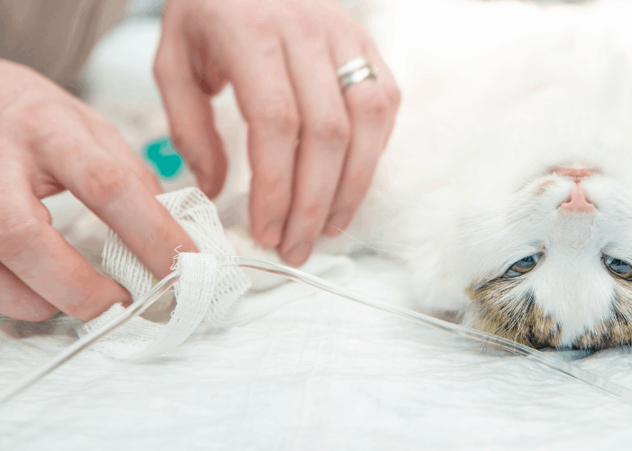 cat's declawing surgery