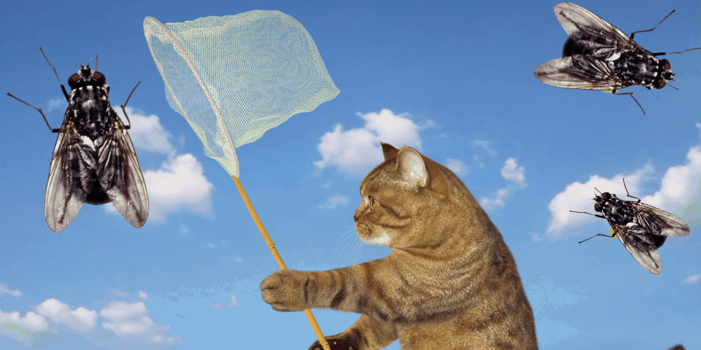 Why Do Cats Eat Flies featured image
