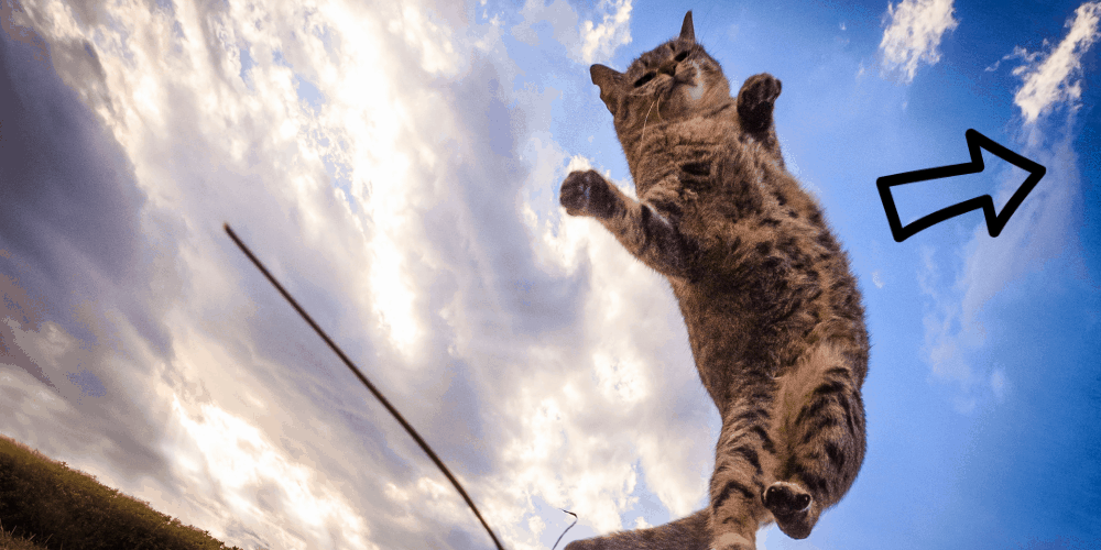 Why Do Cats Jump Sideways image