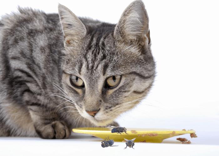 a cat eating flies