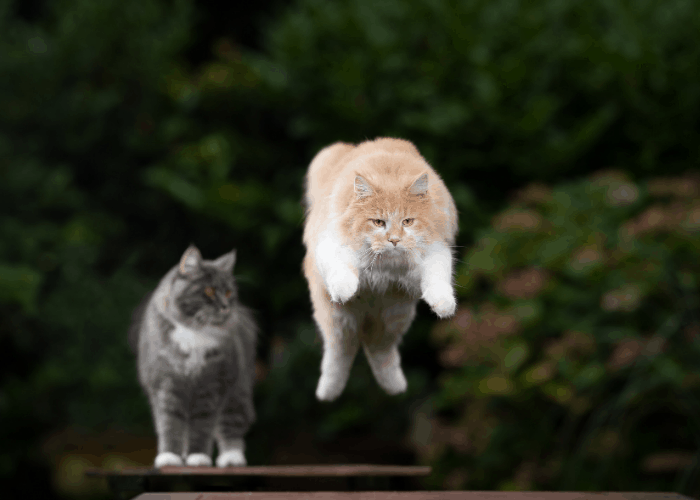 a cat jumping away from the other cat