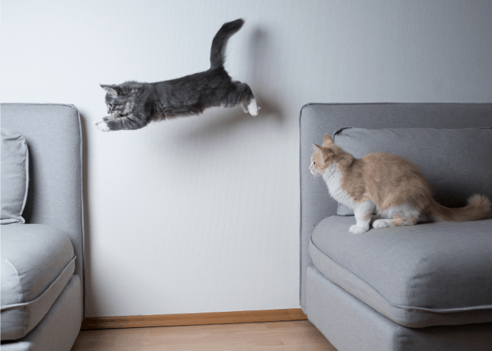 a cat jumping away sideways from the sofa