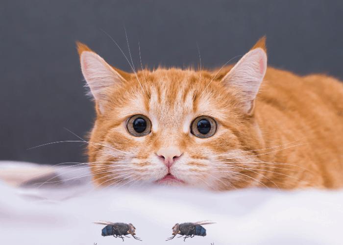 a cat looking at 2 flies