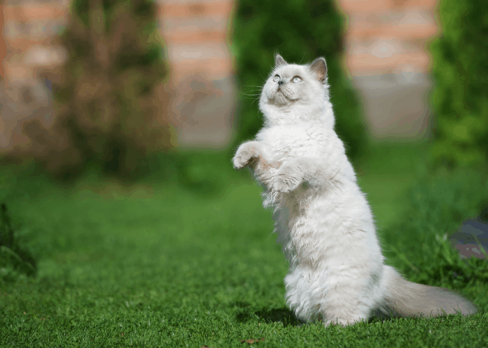 a cat looking at the flies