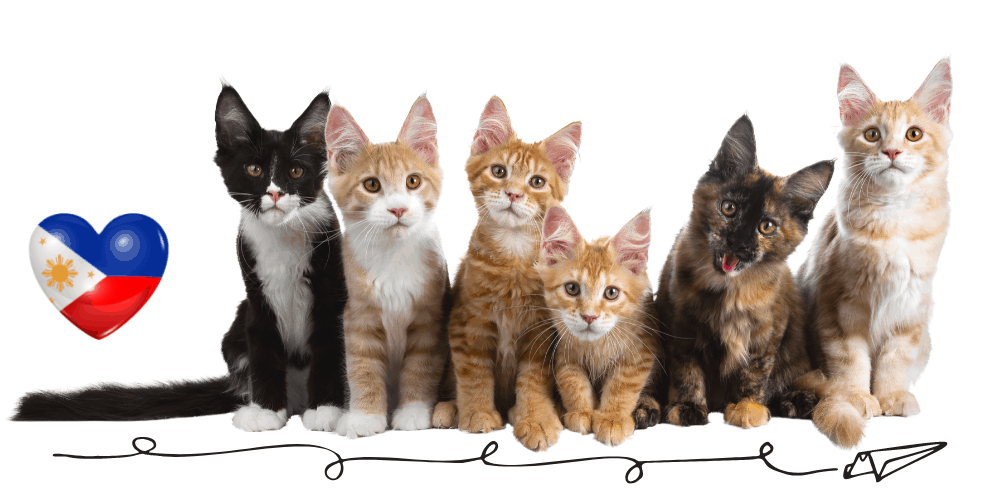 Top 10 most popular Cat Breeds in the Philippines