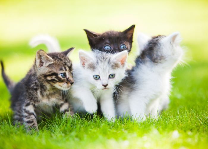 4 kittens on the lawn